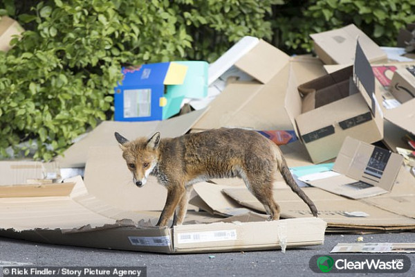 Image from: 'Coronavirus UK: Cardboard piles up at closed recycling centre'